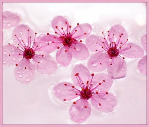 12524_kwiatek4.jpg